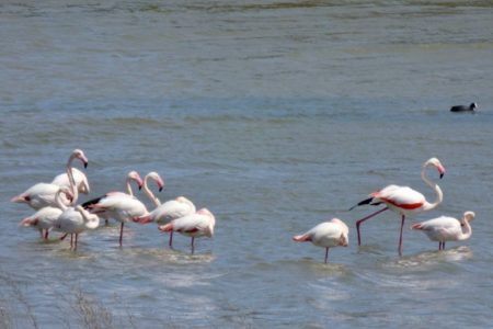 Flamingos, Andalucia